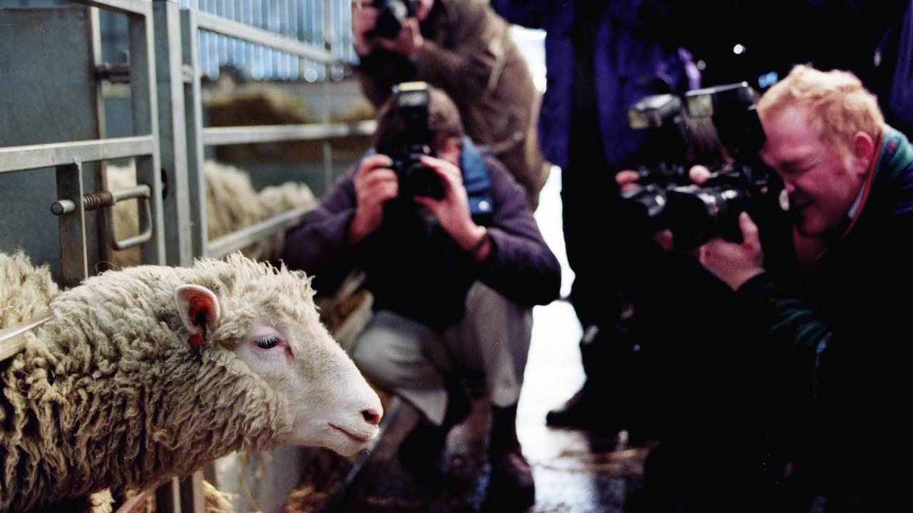 cloning of dolly the sheep and the controversy of human cloning What has been the human and scientific impact of cloning since dolly the sheep's birth in 1996.